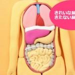どんな印象?きたない臓器・きれいな臓器
